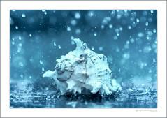 Rain washed seashell (G. Postlethwaite esq.) Tags: dof unlimitedphotos bokeh closeup depthoffield photoborder rain raindrops seashell selectivefocus splash stilllife