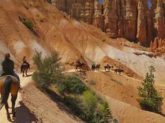 Bryce Canyon (Bernie Emmons) Tags: brycecanyon horses hoodoos orange trailride