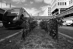 DSCF2761 (LexomIA) Tags: bordeaux street urbain bw nb streetphotography