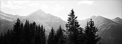 Wipfelflüstern (fluffisch) Tags: fluffisch rauris pinzgau hohetauern ritterkopf hasselblad xpan panorama 45mmf40 rangefinder messsucher analog film adox cms20 cms20ii adotechiv