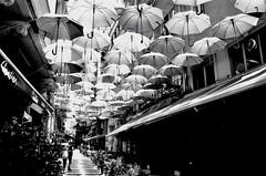 umbrella concept (n.okyayli) Tags: istanbul blackandwhite 35mm analog bw umbrella film ilford canonav1 monochrome
