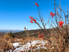 Autumn in Siberian mountains (man_from_siberia) Tags: nature outdoors outdoor grass snow plants berries landscape canon eos 200d dslr canoneos200d canon200d canonrebelsl2 tamron tamronspaf1750mmf28xrdiiild tamron1750mmf28 siberia russia сибирь россия autumn october осень октябрь ягоды трава снег природа 2018