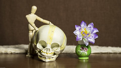 Still Life (DayBreak.Images) Tags: tabletop stilllife wooden mannequin skull vase flower canondslr lomography neptune proteus 80mm lightroom