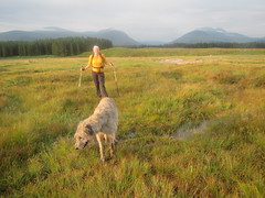 Marika and Karhu heading for Beinn Teallach (andywalker1) Tags: andrewwalker scotland karhu irishwolfhound wolfhound paddywhack