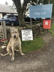 Community Cafe, Dalwhinnie (andywalker1) Tags: andrewwalker scotland karhu irishwolfhound wolfhound paddywhack