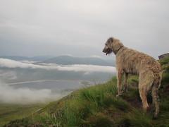 Karhu Above the Clouds (andywalker1) Tags: andrewwalker scotland karhu irishwolfhound wolfhound paddywhack