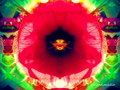 Hibiscus (Stephenie DeKouadio) Tags: art artistic abstract abstractart abstractflower abstractflowers macro macroabstract flowersabstract flowerabstract hibiscus beautiful beauty colorful darkandlight light hypnotique hypnotic
