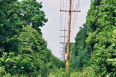 Interventions (Jetcraftsofa) Tags: nikonf4 nikkor13528 fuji superia200 35mm slr filmphotography analogcamera availablelight interventionman v natureutility polespublic workstreesnaturehabitatpower linescut throughelectric grid