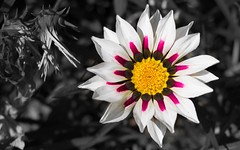 a Bunch of Corn (anlgngr7) Tags: canon eos 77d 18135mm is usm nano lens flower flowers çiçek çiçekler white yellow sarı beyaz colorful magenta macenta plant plants