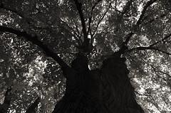 Sillages (Atreides59) Tags: rhone rhône lyon france nature tree arbre black white bw blackandwhite noir blanc nb noiretblanc pentax k30 k 30 pentaxart atreides atreides59 cedriclafrance