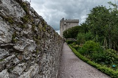 Path to the stone (ivanstevensphotography) Tags: eirexperience irelanddiscover castle blarneycastle ireland🍀 walls ruins foliageplant foliage plantsmakepeoplehappy plants pathway gravel stone clouds leadinglines canonphotography photogram instagramimages houseandgarden