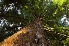 Pilosité (Atreides59) Tags: lyon rhone rhône arbre tree nature vert green jaune yellow ciel sky pentax k30 k 30 pentaxart atreides atreides59 cedriclafrance