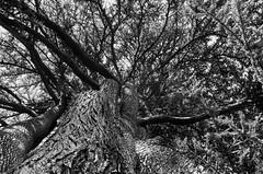 Dégarni (Atreides59) Tags: lyon rhone rhône france nature arbre tree black white bw blackandwhite noir blanc nb noiretblanc pentax k30 k 30 pentaxart atreides atreides59 cedriclafrance