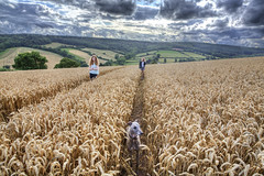 Leading Lines 31/52 (rmrayner) Tags: wheatfieldtramlines farm countryside wheat field walking whippet leadinglines week312019 startingtuesdayjuly302019 52weeksthe2019edition clouds landscape devon ashcombe wideangle farming agriculture hdr lines boredchildren