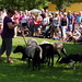 4.8.19 Borovany Sheep Festival 25.jpg