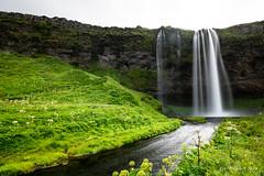 Seljalandsfoss (Iceland) (christian.rey) Tags: seljalandsfoss iceland islande waterfall chutes paysage landscpae longexposure poselongue nd1000 sony aplha a7r2 a7rii 1635 saariysqualitypictures