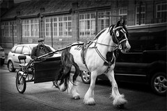 horse and cart on a belfast st (teedee.) Tags: crothers moneyreagh coach works horse cart pony charity run arder speers woodstock road belfast street mono