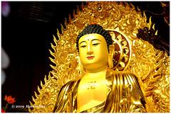 The Buddha Would Be Furious Too - Lingyen Mountain Temple XT7455e (Harris Hui (in search of light)) Tags: harrishui fujixt1 digitalmirrorlesscamera fuji fujifilm vancouver richmond bc canada vancouverdslrshooter mirrorless fujixambassador xt1 fujixcamera fujixseries fujix fujixf50140mmf28 fujizoomlens buddha furious lingyenmountaintemple buddhism killthebuddawhenyouseeone hongkongprotest protest against extradition bill hongkong evil police hongkongpolice
