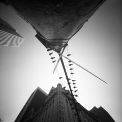 Like birds on a branch (Dikal) Tags: zero image 2000 zero2000 pinhole sténopé lensfree nofilter notrick mediumformat mf squareformat 120 film 6x6 analog ilford fp4 25 asa rodinal homemade bw nb usa newyork roadtrip dikal 2018