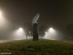 The Owl Statue on Tuesday morning (garydlum) Tags: owlstatue publicart