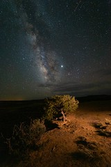 . ([ raymond ]) Tags: acoma acomapueblo astro astrophotography desert landscape milkyway newmexico night stars tree