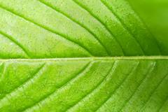 Vegetation - Costa Rica