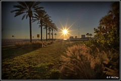 Tampa Bay Sunset (pandt) Tags: courtneycampbellcauseway tampa florida sunset bay palmtrees trees pampas buildings trail sky view beautiful outdoor coastal sun rays light grass canon eos slr 6d