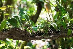 Vegetation - Monteverde, Costa Rica
