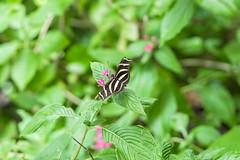 Butterfly - Monteverde, Costa Rica