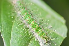 Butterfly Garden - Costa Rica