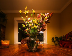 Night Flowers (Photo Alan) Tags: vancouver canada flowers flower night still life stilllife