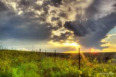 Home (Nathan Perli) Tags: blackhills prairie thunderstorm sweetclover sunset southdakota fence post sky grass rain summer clouds wire barbedwire green blue rural farm ranch