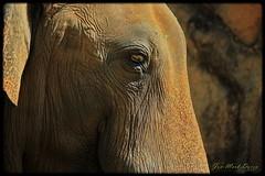 LifeTexture (QuakerVille) Tags: miamizoo zoo miami florida usa