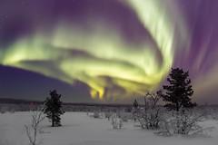 Aurora Borealis in Swedish Lappland (bholmbom81) Tags: bjornholmbom björnholmbom auroraborealis bush kiruna lappland night norrbotten sky snow stars sweden trees winter