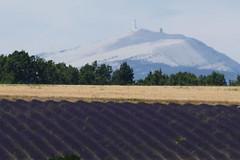P1140979 (alainazer2) Tags: revestdubion montventoux provence france fiori fleurs flowers fields champs ciel cielo sky lavande lavanda lavender