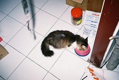 (ourutopia.) Tags: film fuji fujifilm superia superia200 olympus olympusltzoom filmphotography analog analogphotography cat neko meow floor room feed food フィルム ねこ 猫