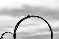 Le seigneur des anneaux (Alexandre DAGAN) Tags: quaidesantilles iledenantes nantes loireatlantique paysdelaloire france ciel cielo sky skylover nuages nuves clouds oiseau bird pigeon noir blanc black white noiretblanc blacknwhite blackandwhite blackwhite buren anneaux rings groupenuagesetciel