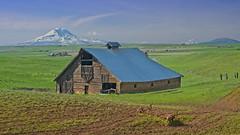 Barn Mt Adams 4403 A (jim.choate59) Tags: jchoate on1pics barn mountain springtime field klickitatcounty mountadams farm rural scenic landscape fence d610 centervillewashington goldendaleoregon washington washingtonstate