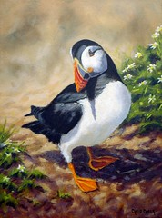 Puffin painting (Chris Chalk   Art Studio - Paintings of Wales) Tags: puffin puffins oil painting skomer island birds wildlife art wales welsh beak nature pembrokeshire