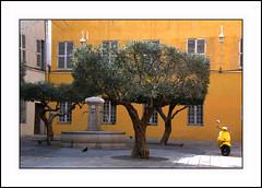 "couleurs de Provence . . . CTT ""yellow"" (nickylechatreux) Tags: city olivier ctt crazytuesdaystheme yellow jaune scooter ambiance"