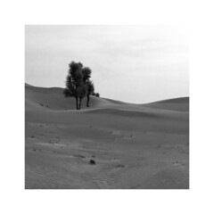 desert (young00) Tags: desert tree hasselblad medium ngc