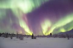 Aurora Borealis in Swedish Lappland. (bholmbom81) Tags: trees winter sky snow night stars bush sweden lappland kiruna auroraborealis norrbotten bjornholmbom björnholmbom