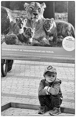 T- Rex Day Dreams (Peter M. Meijer) Tags: rotterdam holland zoo street strada strasse callejera monochrome bw bn zww sonyrx100vi people blijdorp