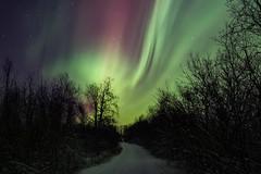 Aurora Borealis in Swedish Lappland. (bholmbom81) Tags: bjornholmbom björnholmbom auroraborealis bush kiruna lappland night norrbotten sky snow stars sweden trees winter