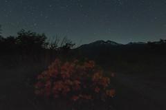 乗鞍高原27・Norikura Highland (anglo10) Tags: japan 長野県 松本市 乗鞍高原 高原 field 星景 starscape flower 乗鞍岳 山 mountain