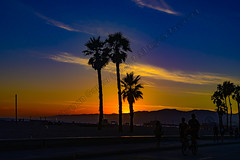 Santa Monica Beach Sunset (morgan@morgangenser.com) Tags: santamonicabeach ocean sand black kids leafs palmtrees sunset pretty beautiful red orange colorful evening dusk clouds blue palmtree pacificpalisades bluff silhouette sun yellow cool photobymorgangenser trees windy colors people