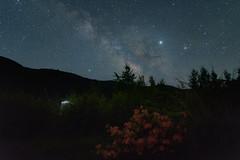 乗鞍高原25・Norikura Highland (anglo10) Tags: japan 長野県 松本市 乗鞍高原 高原 field 星景 starscape flower 天の川