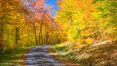 Fall Colors Curve (KRHphotos) Tags: westvirginia fallcolors spruceknob forest landscape nature whitmer unitedstatesofamerica
