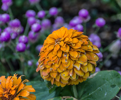 Here and There. (Omygodtom) Tags: usgs urban flora flower flickriver algorithm nikkor nature d7100 bokeh dof nikon70300mmvrlens street
