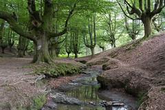 hayedo (canalesjacinto58) Tags: hayedo water forest landscapee sony sonya7iii naturaleza ngc